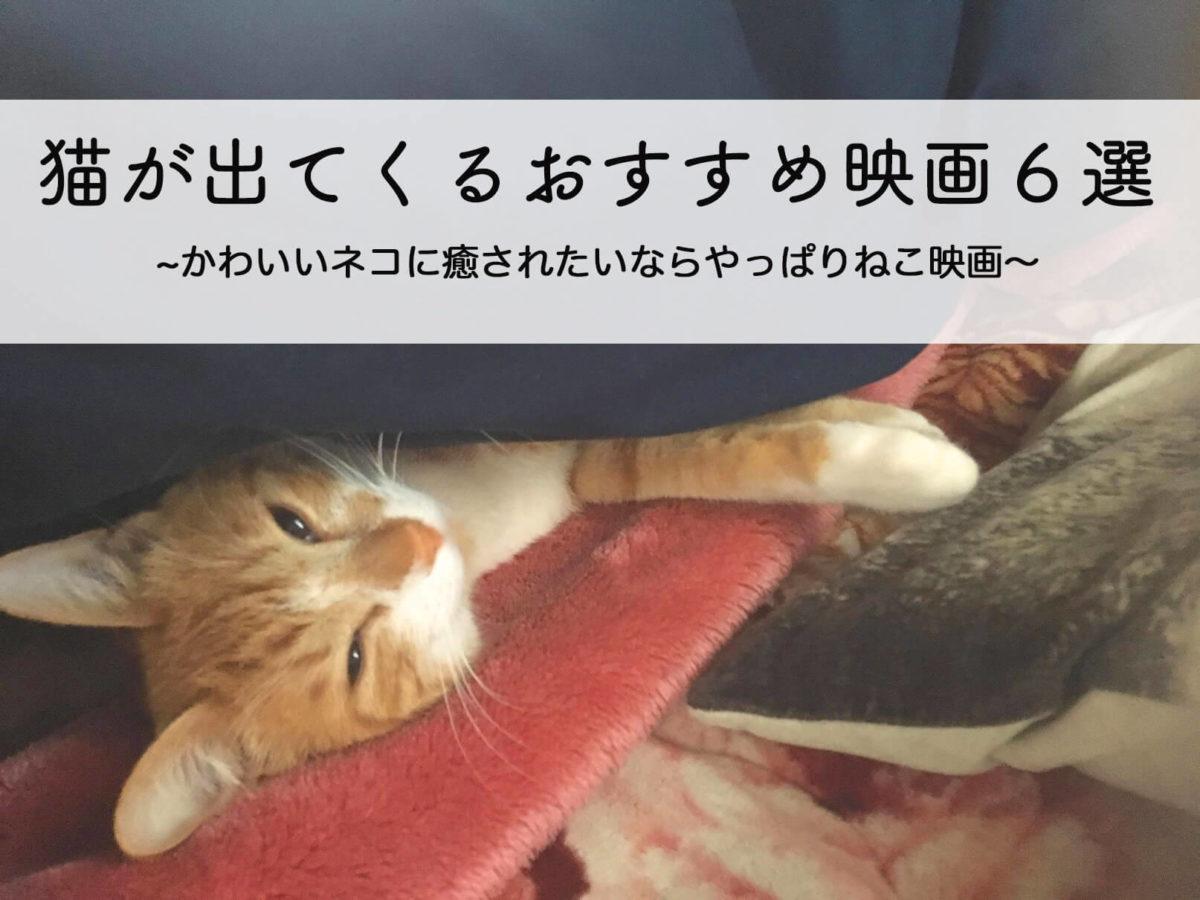 猫が出てくるおすすめ映画6選|かわいい猫に癒されたいなら猫映画